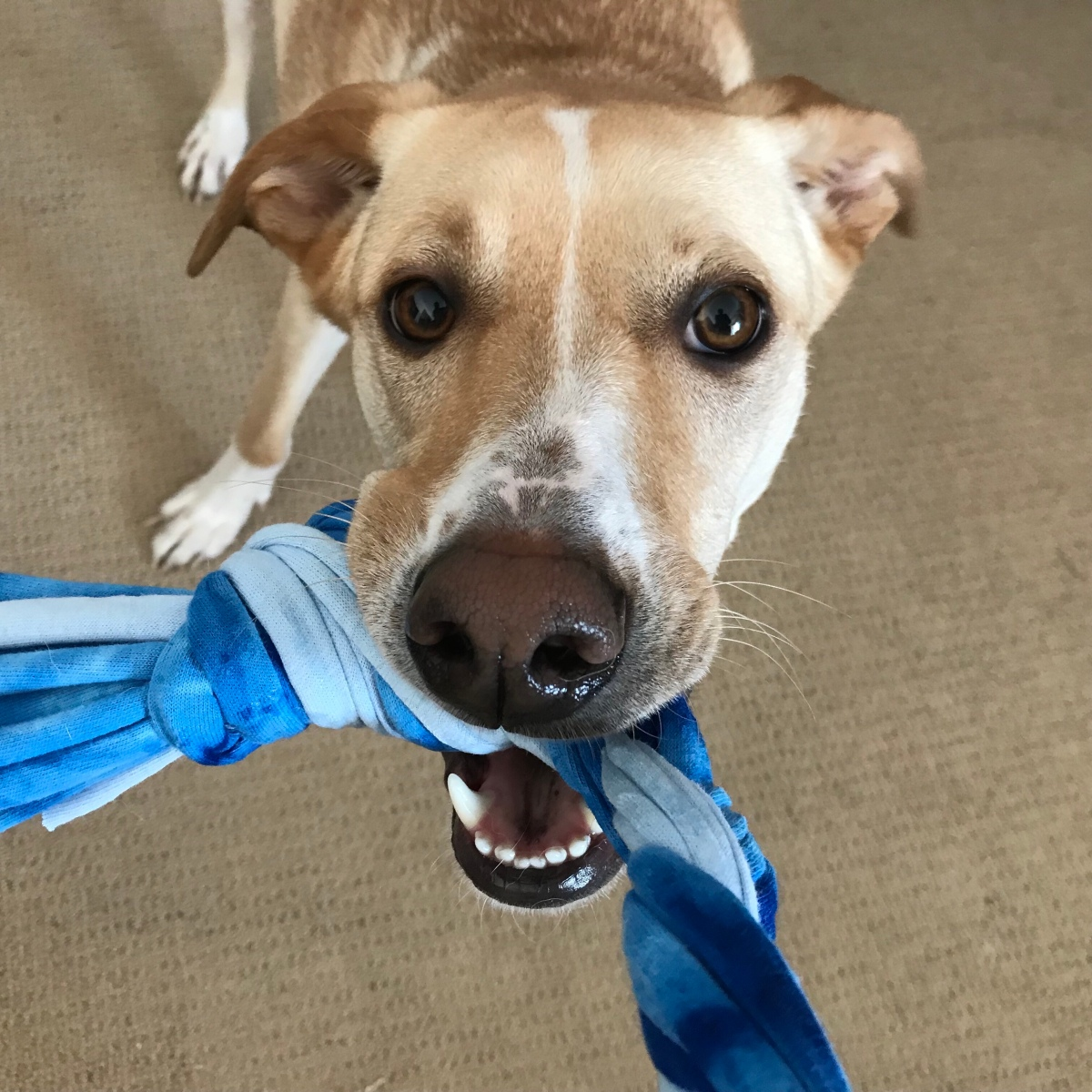 No-Cost DIY Dog Toys